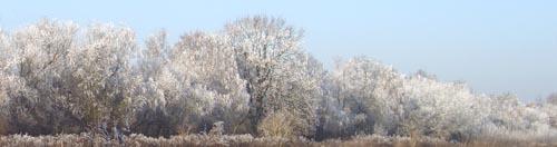 Laufen im Winter unter schneebedeckten Bäumen