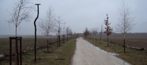 Laufen bei Regen durch die Felder