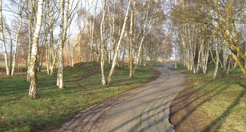 Laufen im Birkenhain