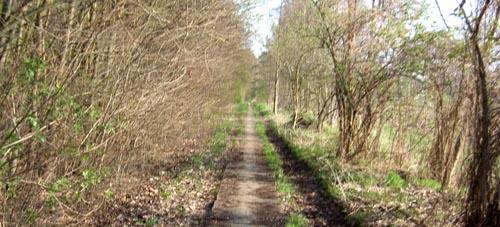 Laufen im Frühling im Wald