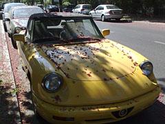 Auto mit Blütenstaub