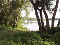 Blick durch Bäume auf die Boote