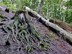 Lauf durch den Wald