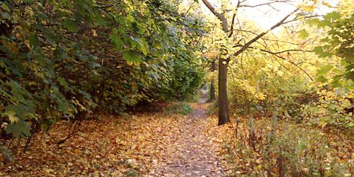 Laufen im Wald im Herbst