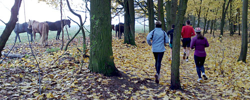 Läufer und Pferde