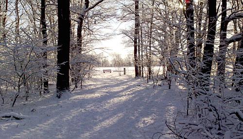 Parkbank an einer Waldlichtung im Winter