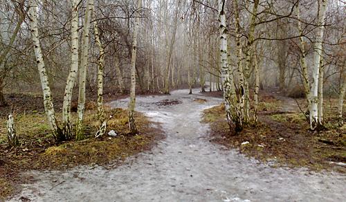 Eisfläche zwischen Birken