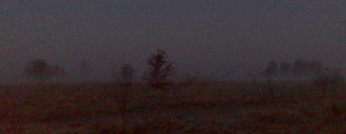 Nebel über einem Feld