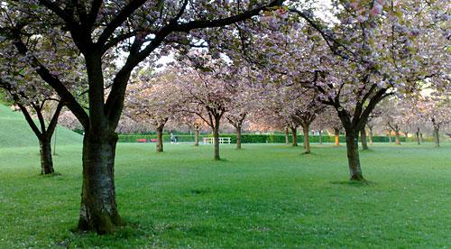 Bäume am Lilienthal-Denkmal