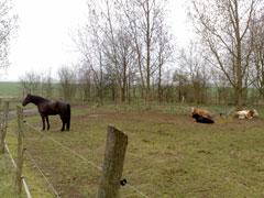 Pferde und Rinder