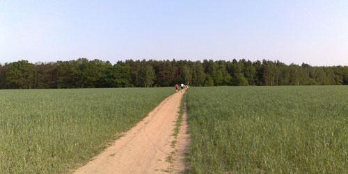 Weg zwischen Feldern
