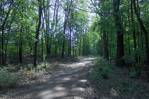 Mauerweg-Lauf im Wald
