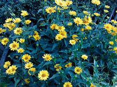 Noch mehr Blumen