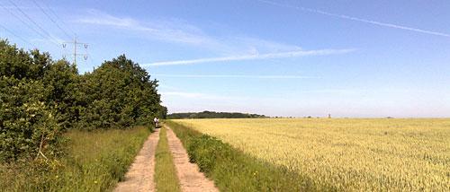 Großes Feld bei Diedersdorf