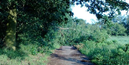 Umgestürzter Baum auf Laufweg