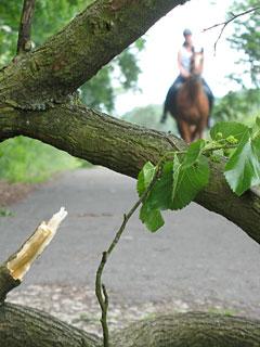 Reiter auf dem Mauerweg
