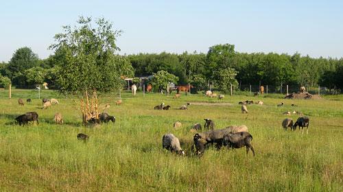 Weide mit Pferden, Schafen und Ziegen