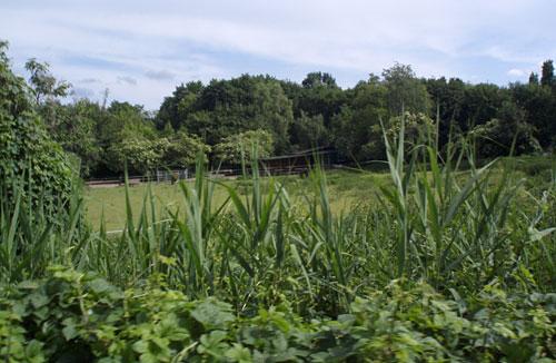 Landschaft am Mauerweg