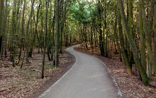 Weg zum Jagdschloss Granitz