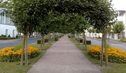 Strandstraße im Ostseebad Baabe