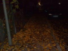 Laufen im Dunkeln über feuchte Blätter