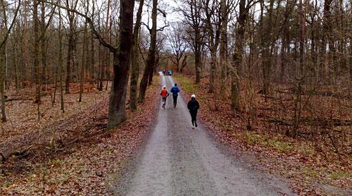 Läufer im Grunewald
