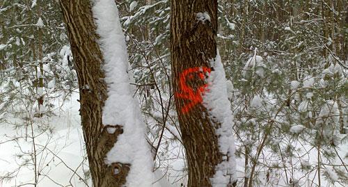 Markierung am Baum