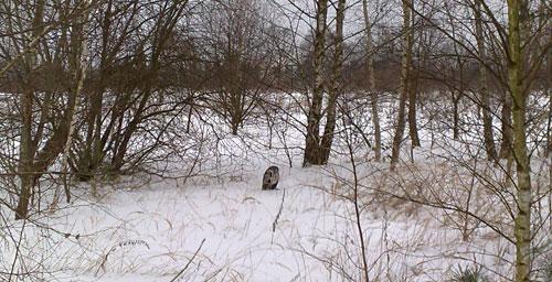 Uhu im Schnee