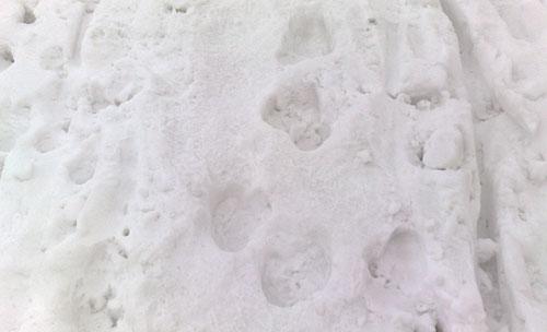 Spuren im hartgefrorenen Schnee