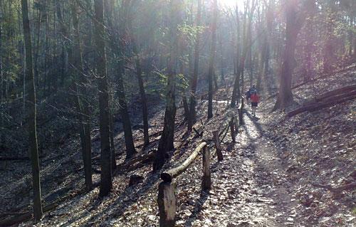 Läufer auf dem Havelhöhenweg