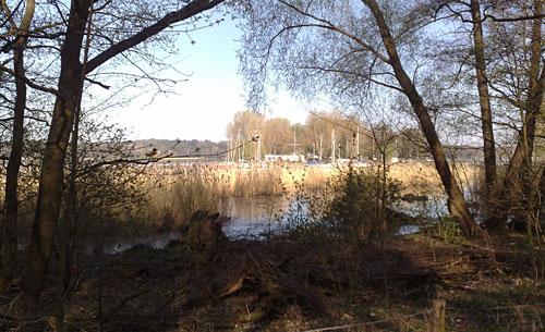 Blick auf die Havel mit Schilf