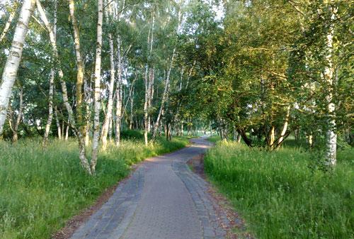 Weg zwischen Birken
