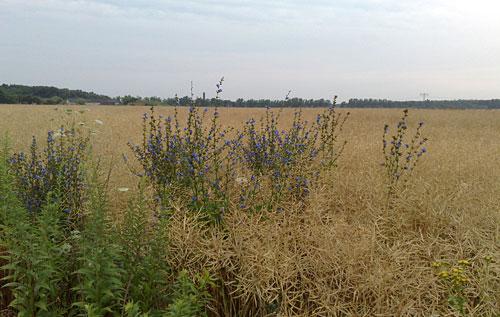 Blumen auf Feld