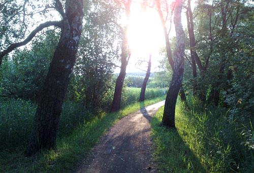 Barlachweg mit aufgehender Sonne