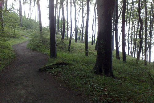 Bäume auf dem Hochuferweg