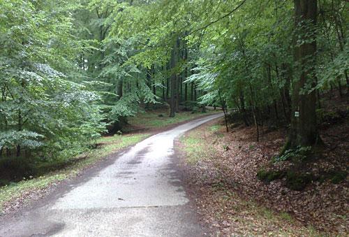 Waldweg mit Steigung