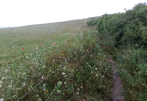 Pfad mit Blumenwiese