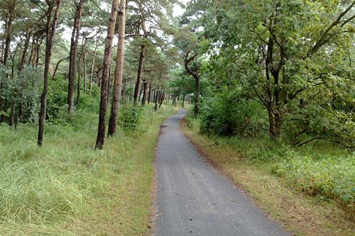 Weg im Wald