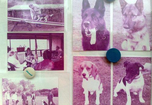 Magentafarbene Hunde-Fotos