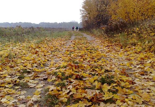 Läufer und Herbstblätter