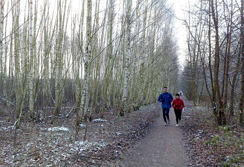 Läufer auf dem Mauerweg mit Birken