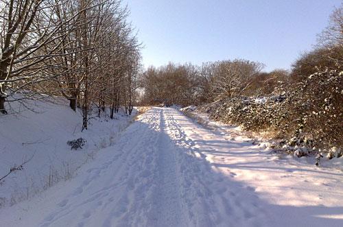 Loipe im Schnee