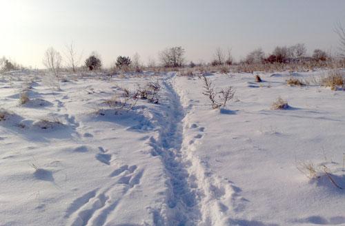Schnee in der Feldmark