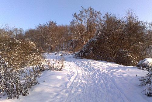 Weg im Freizeitpark Marienfelde