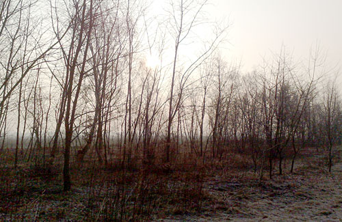 Sonne und kahle Bäume