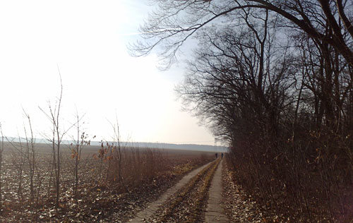 Läufer auf Weg neben den Feldern