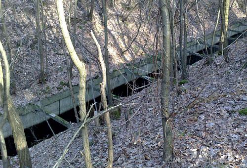 Königsgraben im Wald