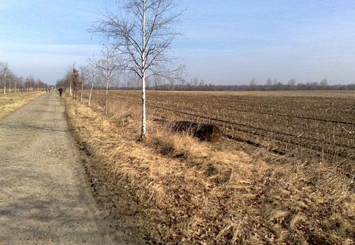 Läufer auf Weg zwischen Feldern am Mauerweg