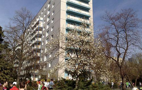 Blühende Bäume und Hochhäuser