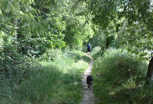 Hund und Läufer auf schmalem Weg zwischen Büschen